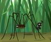 Ants Evening